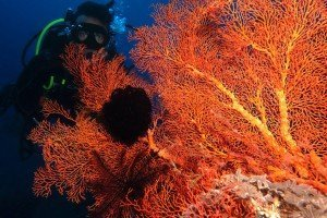 Specialite AWARE conservation corail - Perth Ocean