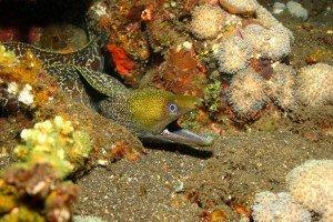 Specialite naturaliste sous-marin - Naturalist - Perth Ocean